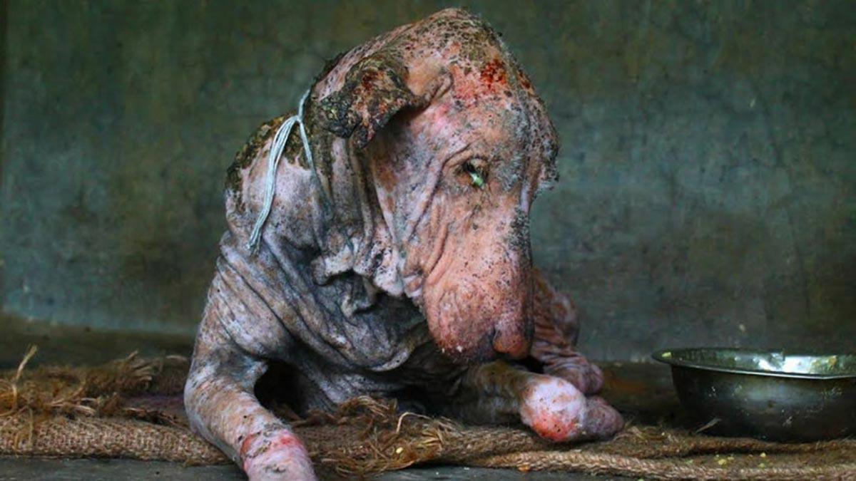 Este perro había perdido la esperanza de vivir