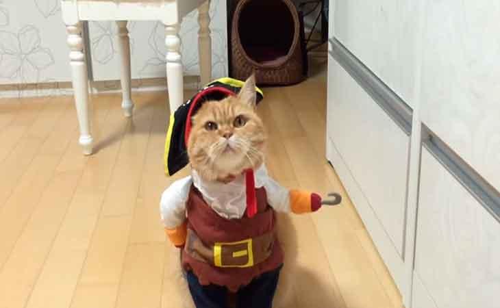 gato, disfrazado