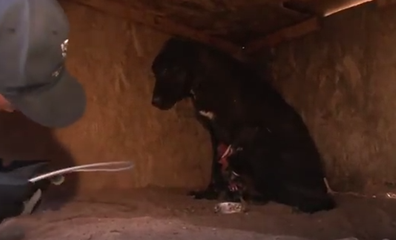 Rescatan a mas de 200 animales que vivían en la miseria