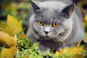 5 motivos por qué recomiendan vivir con un gato en casa