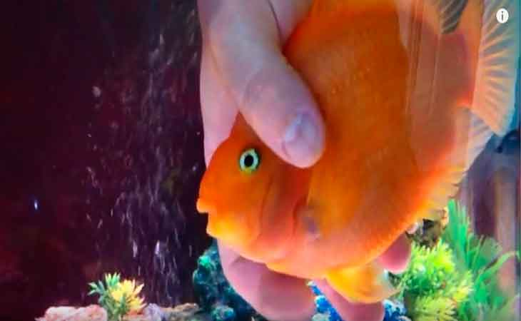 pez acariciado