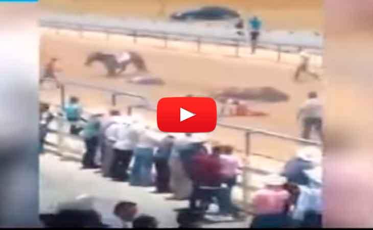 Mira la brutal caída de un caballo en carrera - Vídeo